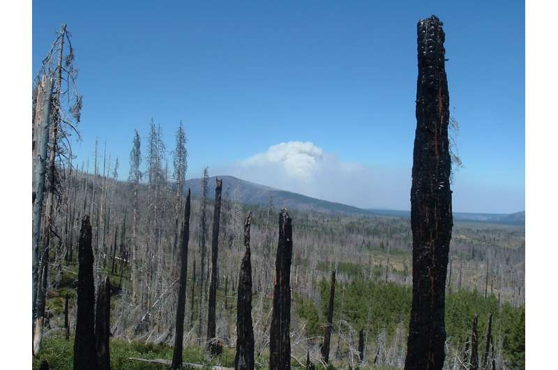 New models predict fewer lightning-caused ignitions but bigger wildfires by mid century
