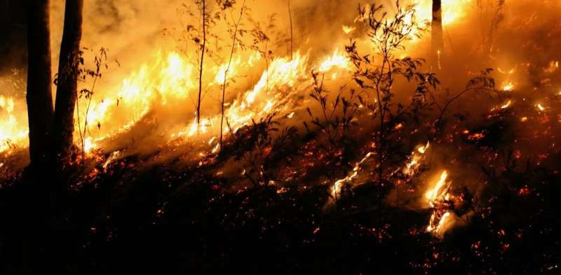 New research finds native forest logging did not worsen the Black Summer bushfires