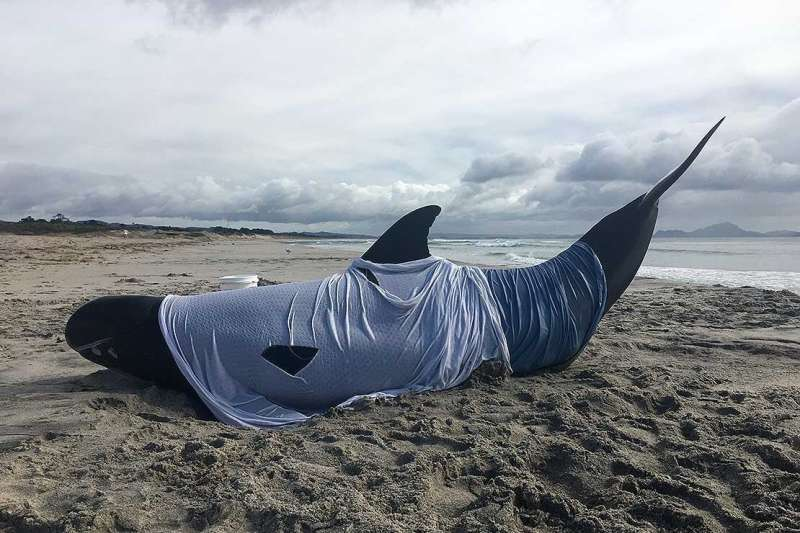 New research reports a lack of information on euthanasia for stranded marine mammals