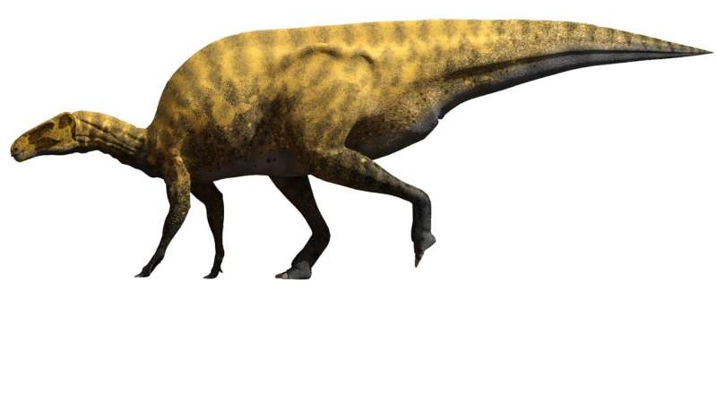 New sharp-clawed dinosaur species identified that was as big as a school bus