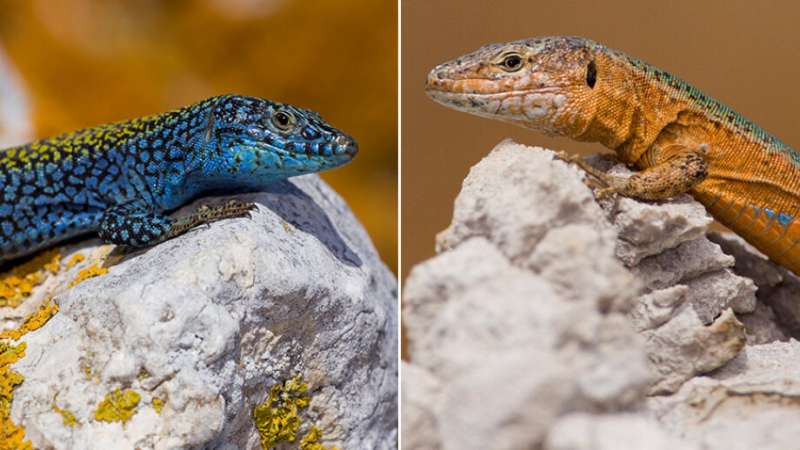 New species formed when the Mediterranean dried up