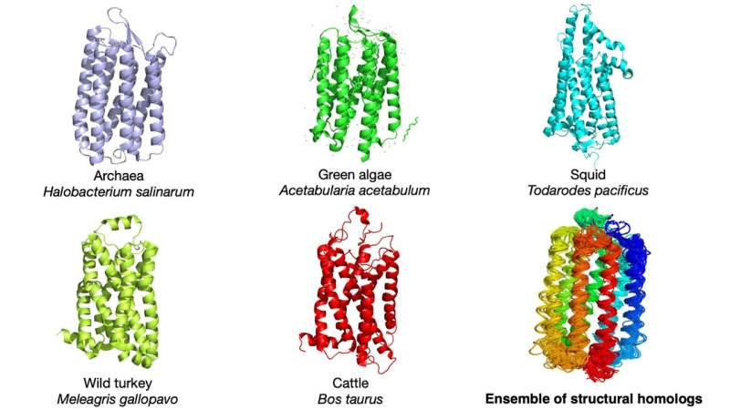 New statistical study finds link between protein evolution and thermal variation