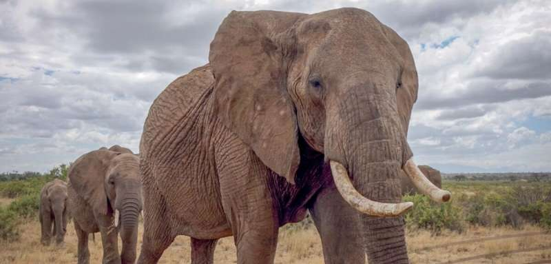 New study finds elephants show risk-avoidance behaviour in response to human-generated seismic cues