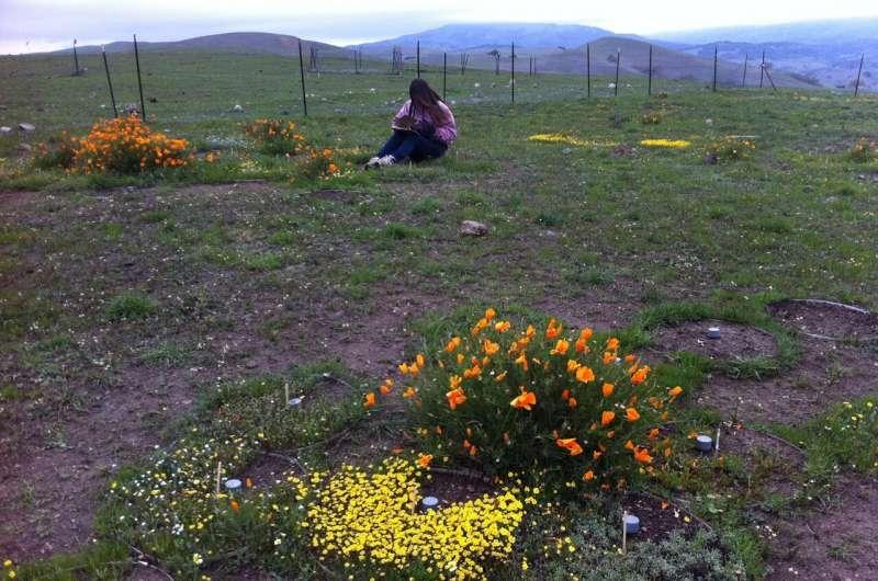 Un nuevo estudio sobre los impactos del cambio climático en las plantas podría conducir a mejores estrategias de conservación