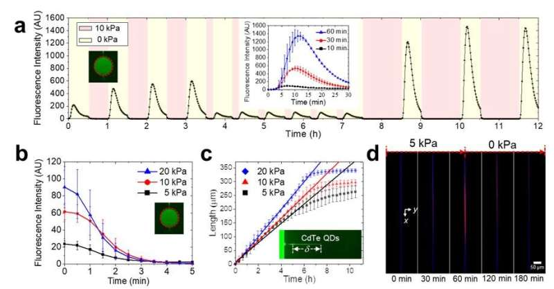 New study presents evaporation-driven transport-control of small molecules along nanoslits