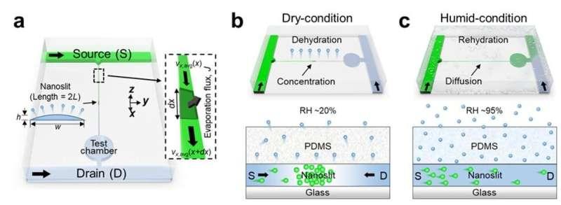 New study presents evaporation-driven transport control of small molecules along nanoslits