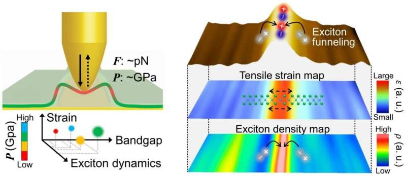 New study presents tip-induced nano-engineering of strain, bandgap, and exciton funneling in 2D semiconductors