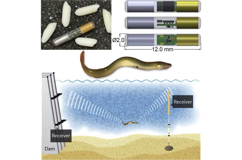 New, tiny battery powers big insight into fish passage for hydropower