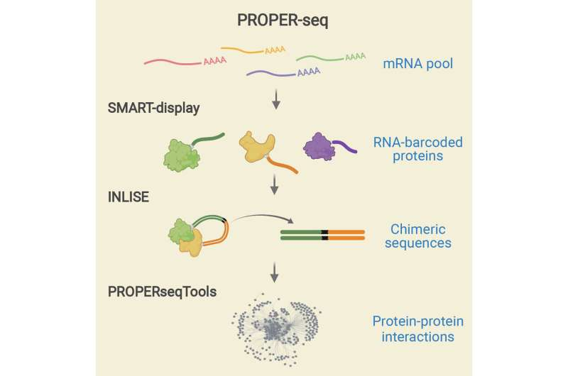 New tool enables mapping of protein interaction networks at scale