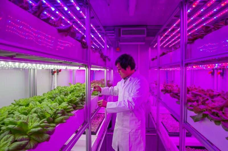 New vertical farms will tackle global food challenges – and are set to be used by retailers, caterers and schools
