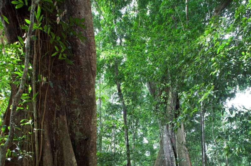 New view of species interactions offers clues to preserve threatened ecosystems