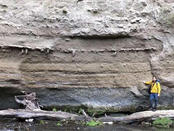 يشير السجل الأحفوري لنيوزيلندا إلى أن المزيد من الأنواع تعيش في المياه الدافئة.  لكن المعدل الحالي للاحترار قد يكسر هذا