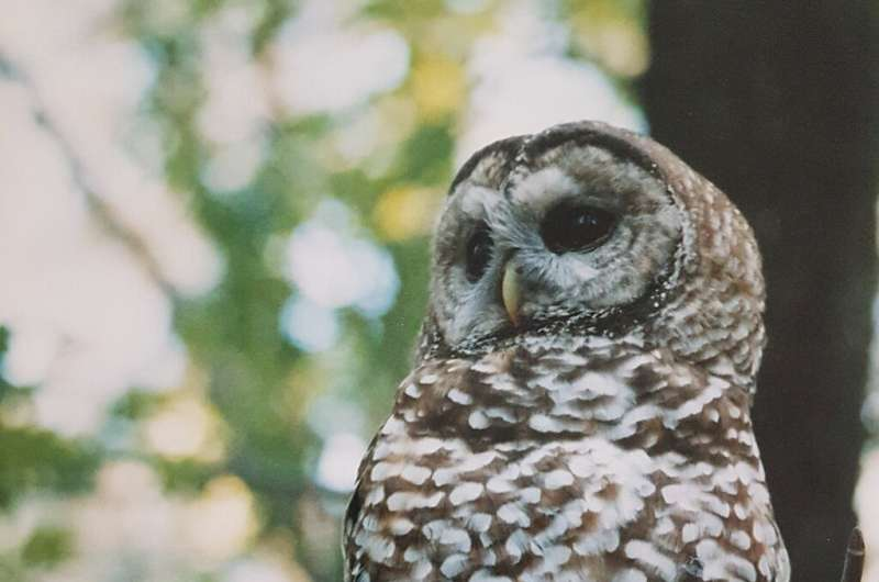 New Analysis Finds Spotted Owls Harmed by Post-fire Logging, Not Fire