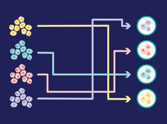 New computational tool uses gene expression data to measure how closely laboratory cancer models compare to real tumors
