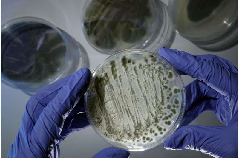 New discoveries on deadly fungus - might be a key for treatment