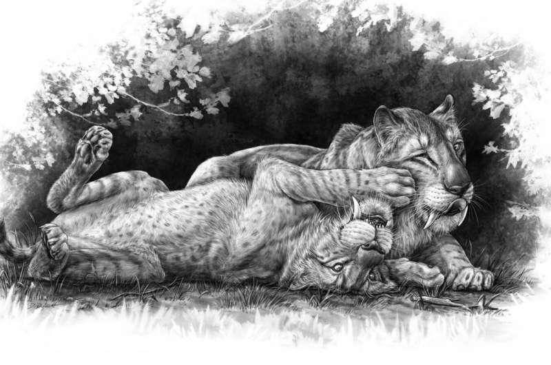New discovery sheds light on the mysterious family life of notorious sabre-toothed tiger