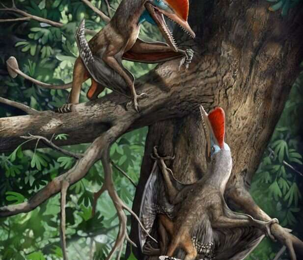 New Jurassic flying reptile reveals the oldest opposed thumb