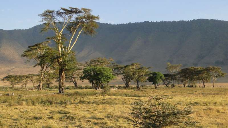 Newly discovered African 'climate seesaw' drove human evolution