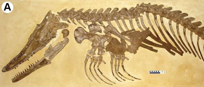 Newly identified mosasaur was fish-hunting monster