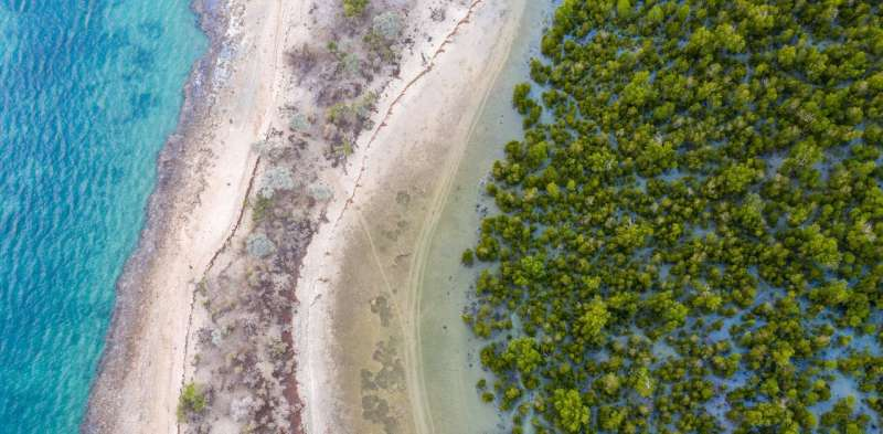 New mangrove forest mapping tool puts conservation in reach of coastal communities