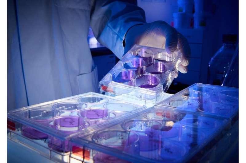 New promising antibodies against SARS-CoV-2