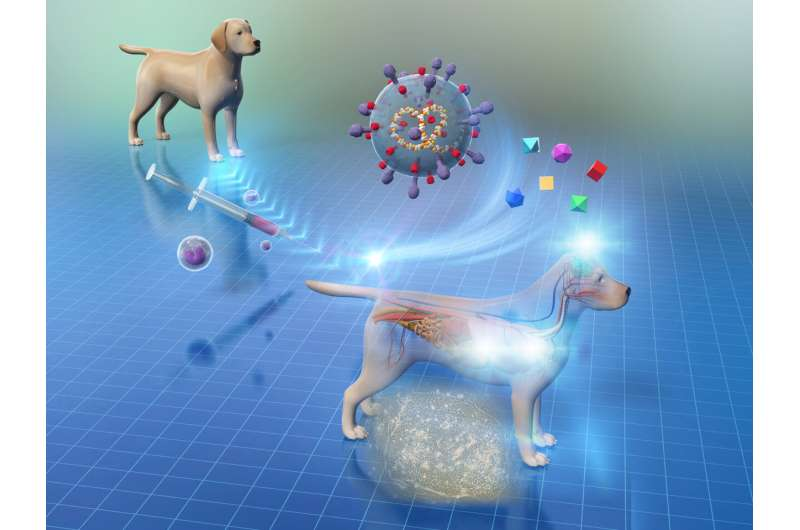 New stem cell therapy in dogs -- a breakthrough in veterinary medicine