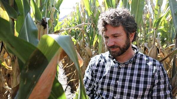 Nuevo estudio compila cuatro años de datos de pérdida de maíz de 26 estados y Ontario, Canadá