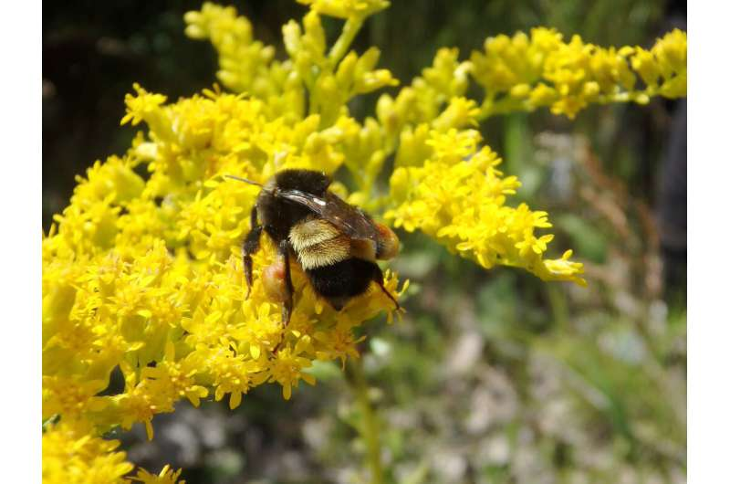 Next-generation sequencing uncovers what's stressing bumblebees