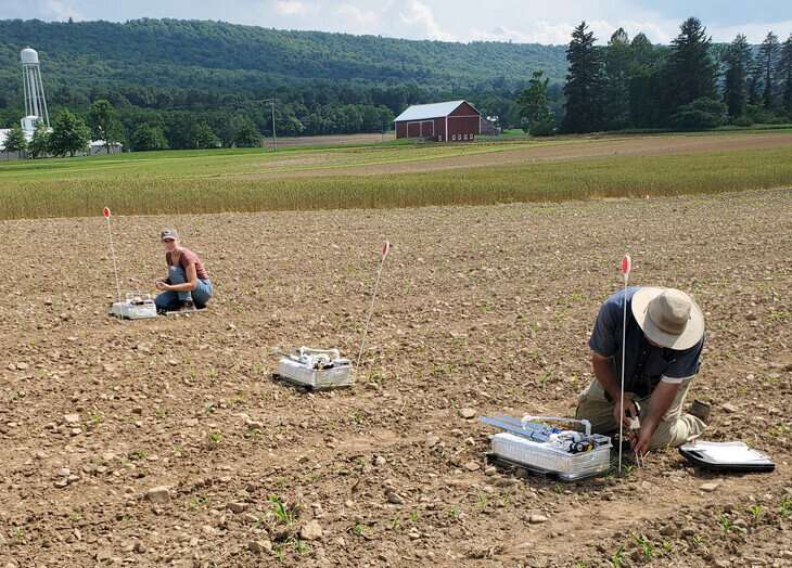 Nitrous oxide emissions, coming from legume cover crops, manure, can be reduced