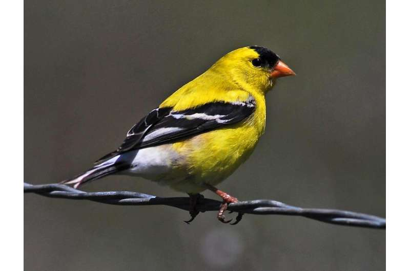 Noise and light pollution can change which birds visit our backyards