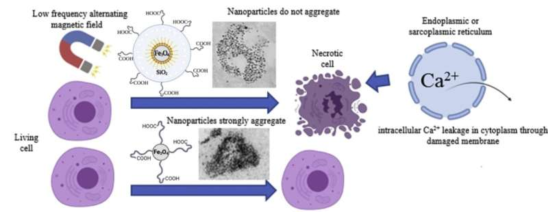 Non-Magnetic Shell Coating of Magnetic Nanoparticles as Key Factor for Cytotoxicity