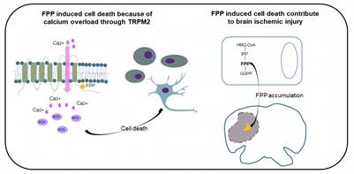 Normally harmless cell molecule triggers neuron death