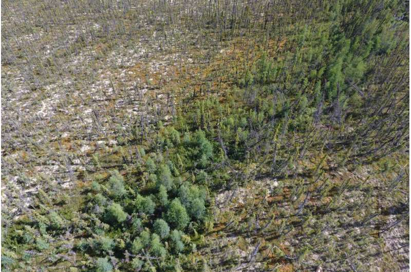 Northern forest fires could accelerate climate change