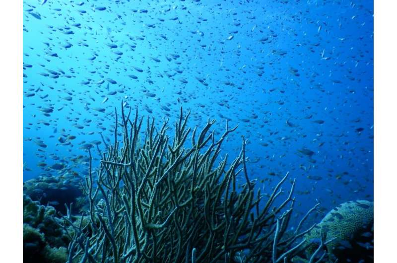 Northern Red Sea corals live close to the threshold of resistance to cold temperatures