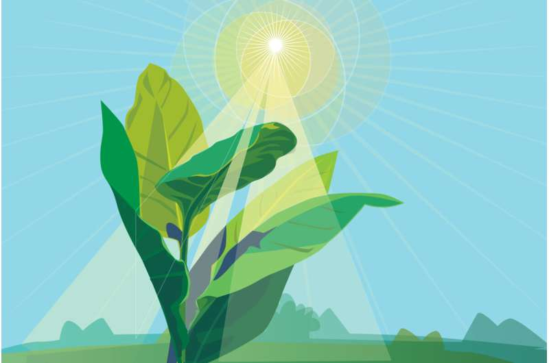 Not just CO2: Rising temperatures also alter photosynthesis in a changing climate