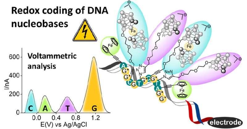 Novel method of labeling DNA bases for sequencing
