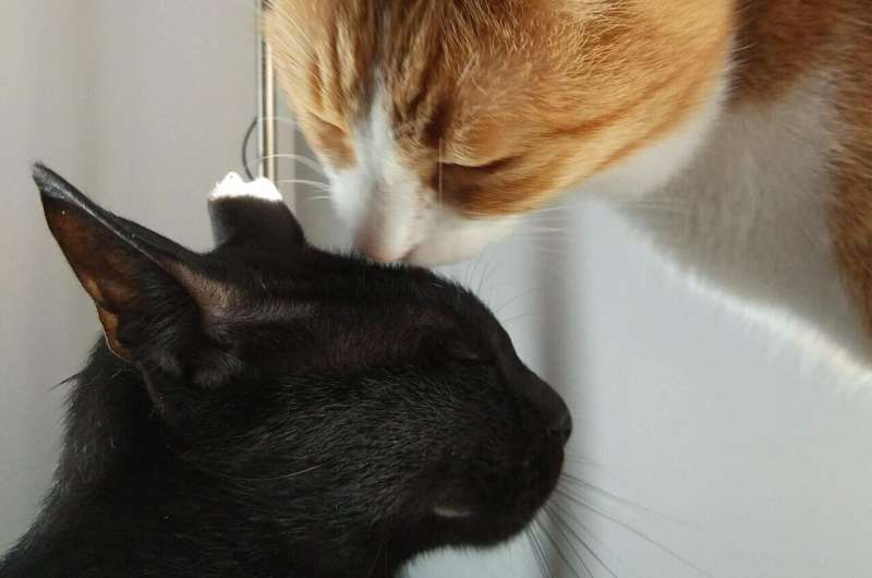 Novel immunotherapy approach to treat cat allergy