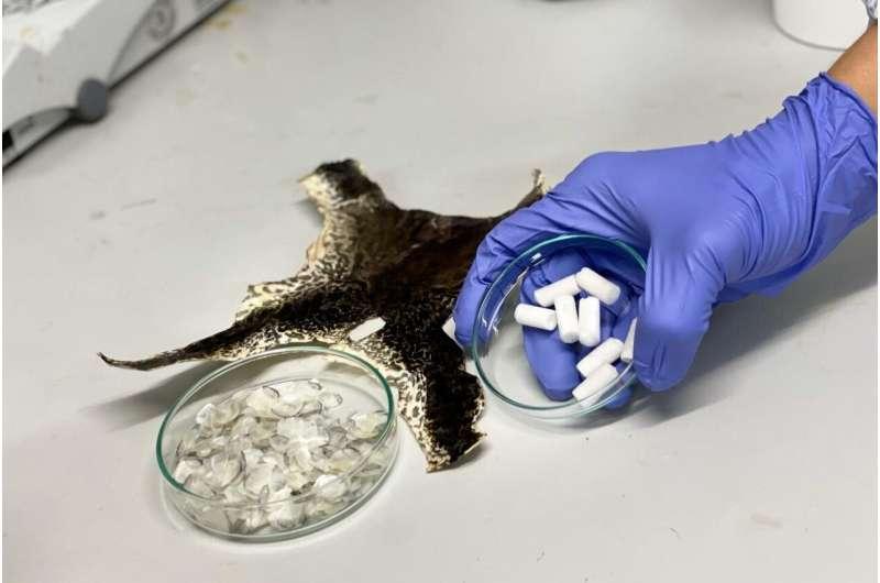NTU Singapore scientists turn aquaculture waste into new biomaterial for tissue repair
