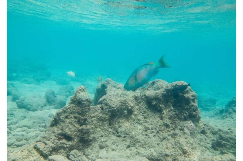 Oahu marine protected areas offer limited protection of coral reef herbivorous fishes