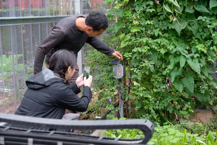 Observing eco farmers could guide sustainable information technology innovation