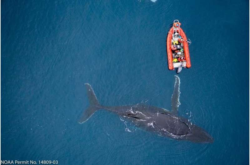 Ocean's mammals at crucial crossroads