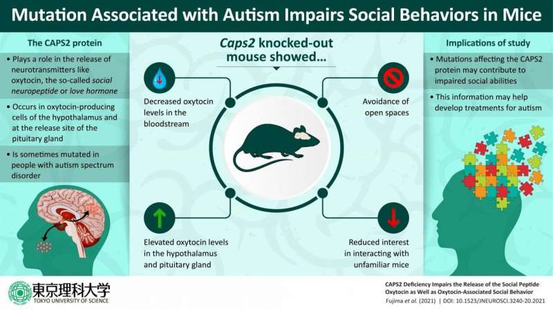 Of mice and men: Mutation linked to autism impairs oxytocin-mediated social behavior