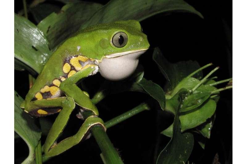 On the Brink: Brazil's Coastal Rainforest
