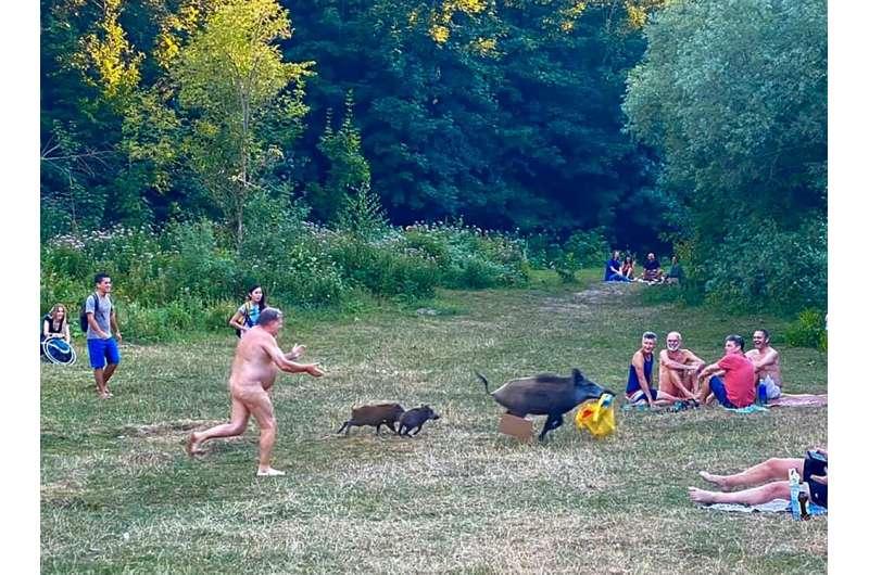 One cheeky wild boar stole a nudist's bag in Berlin last year