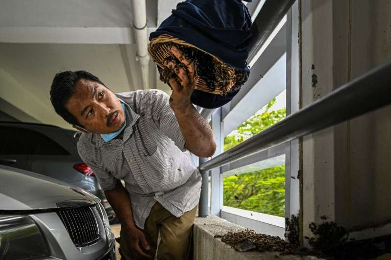 Ooi Leng Chye is a member of a group that saves bees and their nests when they are discovered in cities, seeking to prevent the