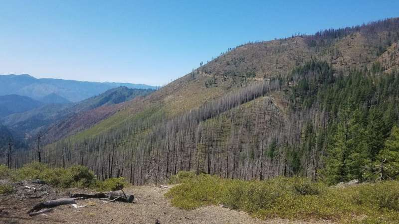 Oregon State research shows why some pockets of conifer survive repeated forest fires