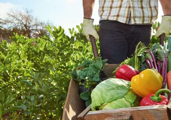 Los alimentos orgánicos no siempre están libres de pesticidas
