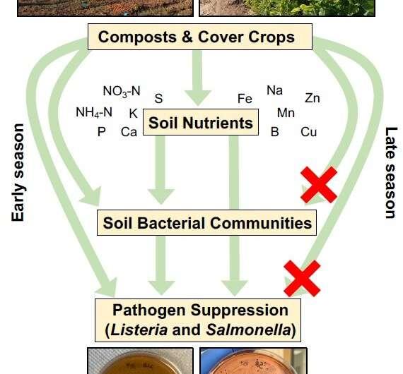 Los abonos orgánicos pueden ayudar a los agricultores a prevenir los brotes de enfermedades transmitidas por los alimentos