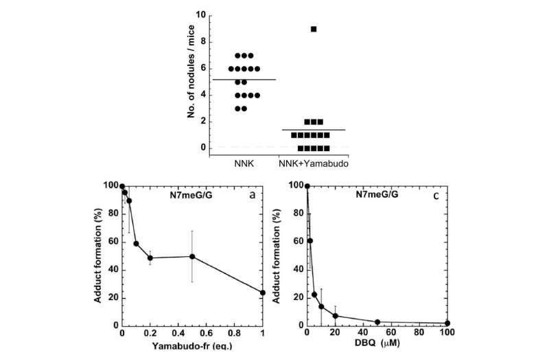 OU-MRU: A berry vine found in Asia proves useful in combating lung cancer