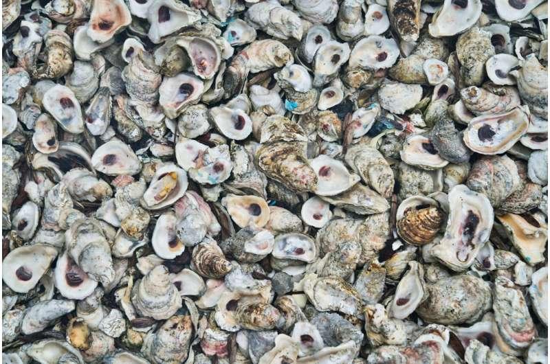 oyster reefs
